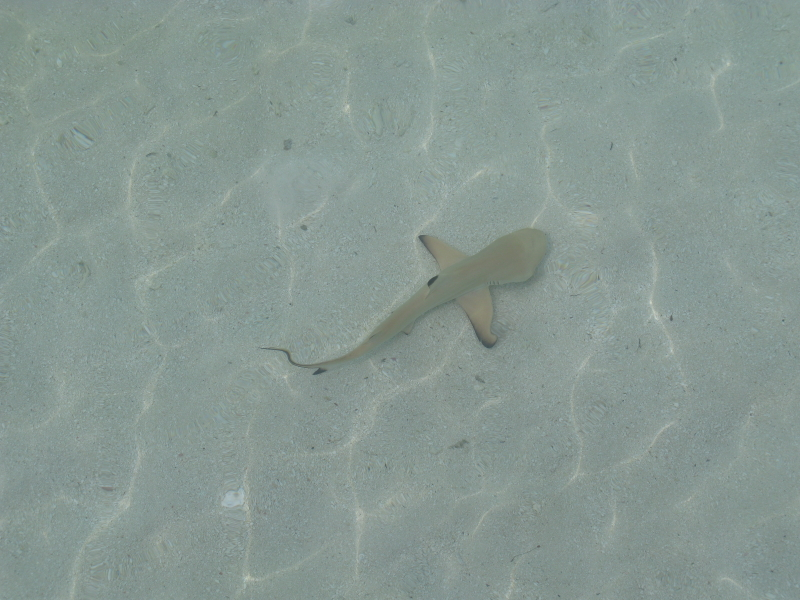malediven2008_IMG_0241