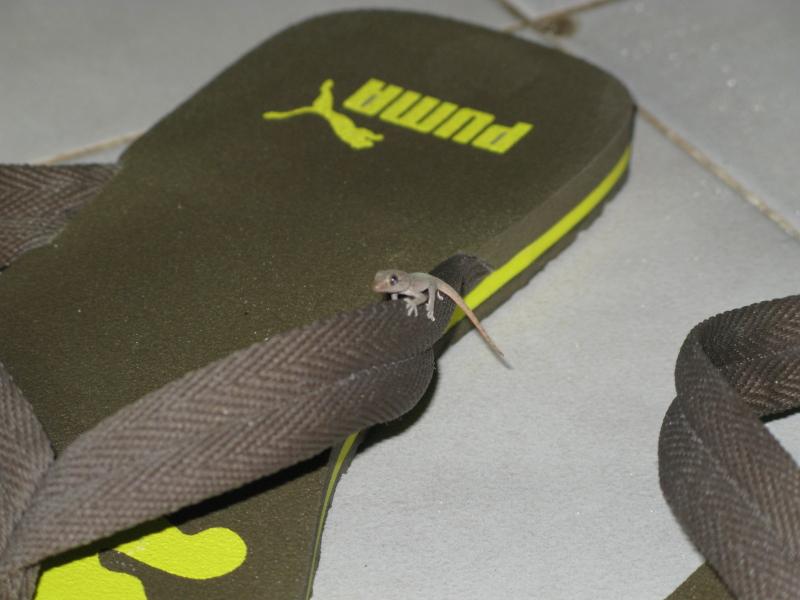 malediven2008_IMG_0478