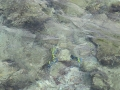 malediven2008_IMG_0198