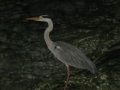 malediven2008_IMG_0444