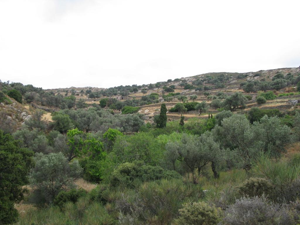 naxos-2010_IMG_1222