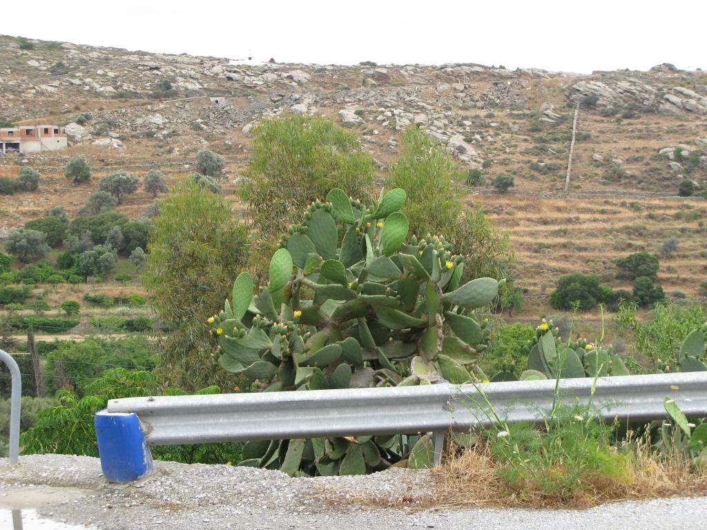 naxos-2010_IMG_1230